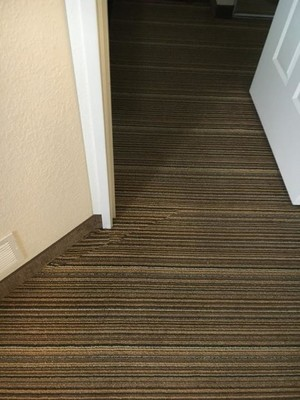 True Eco Dry Carpet cleaning in Hodgkins