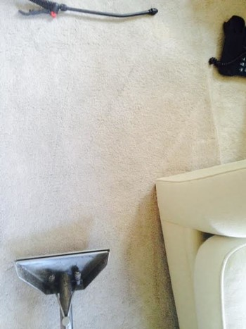 True Eco Dry cleaning carpet via hot water extraction in River Forest IL.